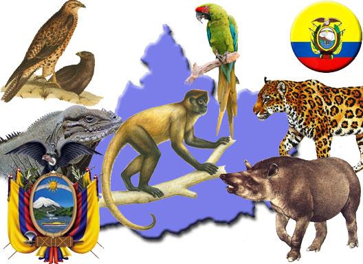 Especies en peligro de extincion : ECUADOR: VIDA ANIMAL